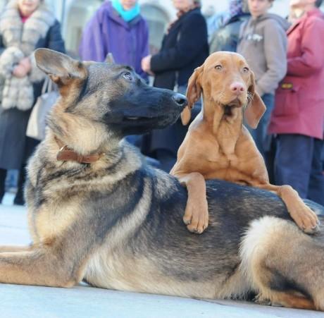 München hundepension