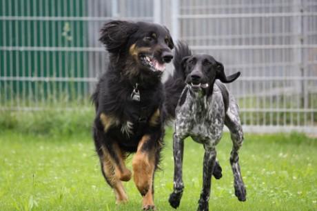 München hundehotel